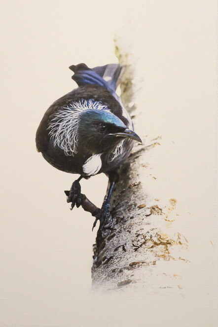 Michelle Wilson, Tui, Photo printed on linen, $460